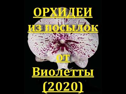 СОСТОЯНИЕ орхидей ИЗ двух ПОСЫЛОК от Виолетты (2020).