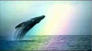 Whales & Dolphins ~ Natural Sounds