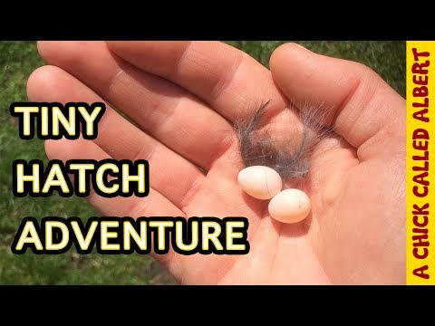 This Man Saved the Tiniest Bird You've Ever Seen...