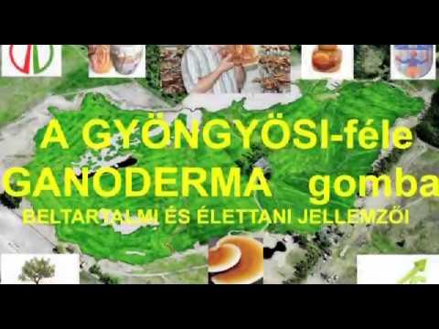A condyloma kezelés leírása