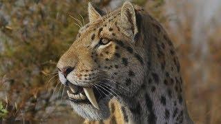 10 самых страшных хищников эры млекопитающих