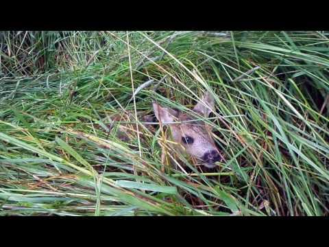 Co se děje v trávě... Malé srnče volá matku (Skaliny - Slepičí hory)