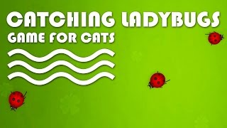 CAT GAMES - Catching Ladybugs! Bugs Video for Cats to Watch.