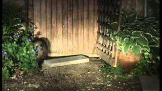 Badger Break-in