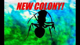 NEW COLONY REVEAL! + Colony Updates | Update Video Presented By Ant Co