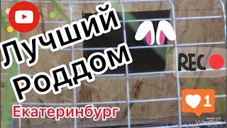 Роддом #роды родовая для Кроликов #СвоимиРуками Клетка для кроликов