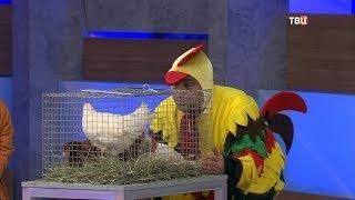 Голень куриная. Естественный отбор