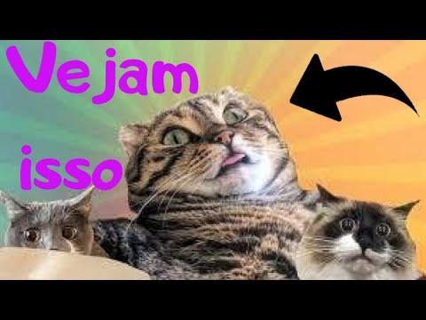 animais engraados tente no rir  ces e gatos engraados #01