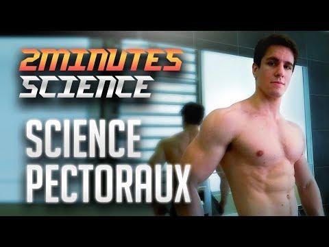 Les fonctions des muscles ronds du dos
