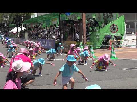 (学校法人)平成学園ひまわりあとむ幼稚園 第66回よさこい祭り