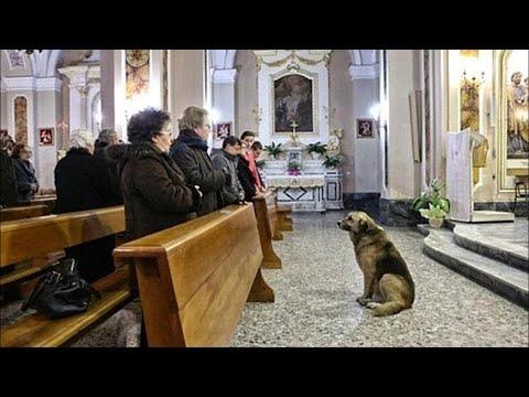 Лев толстой о церкви