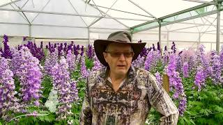 The Story Of Dowdeswells Delphiniums, Terry And Katrina