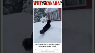 Why Canada? Dogs in the Snow!