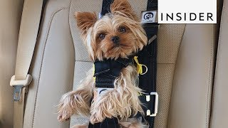 This Seat Belt Keeps Your Dog Safe During Car Rides