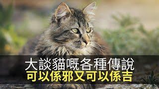 思浩話你知今日8月8日係世界貓貓日!大談貓嘅各種傳說,呢到代表邪,另一到又代表吉?(大家真風騷)