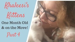 How to Feed 1 month old Kittens - Khaleesi's Kittens Part 4