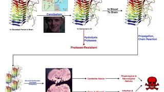 Prions | Mechanism of Kuru & Relation to Creutzfeldt-Jakob Disease