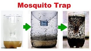 Mosquito Trap | How to Make a Home Made Mosquito | Easy and Effective | Eco Friendly Mosquito Traps