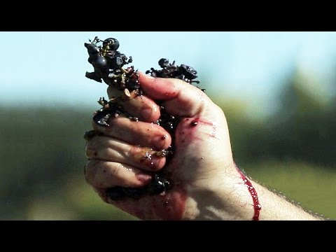 VENDANGES Bande Annonce (Documentaire - 2016)