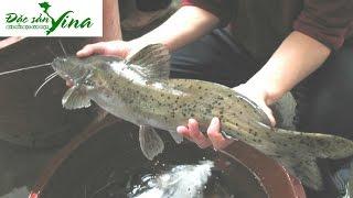 Cá Lăng nướng sông Sêrêpôk đặc sản Đăk Nông| Đặc sản Vina | Cá Lăng Đắk Nông