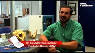 El libro rojo, Especies amenazadas - Manatí, la sirena del Caribe