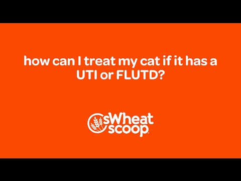 Video how can I treat my cat if it has a UTI or FLUTD?