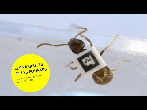 Les bactéries les parasites provoquent langine