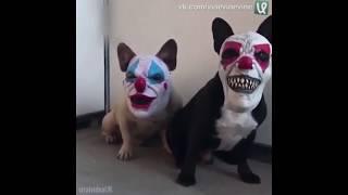 Собаки с масками. Смешное видео. Приколы.
