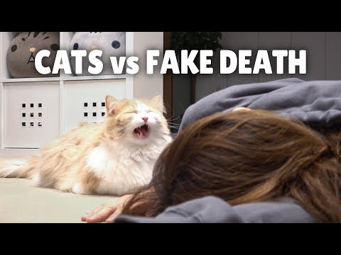 Will a Cat Care If You Die? A Funny Experiment