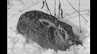 Зайцы на лунках