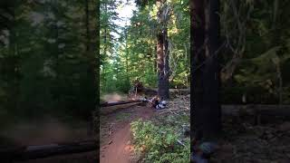 Timothy Lake Trail -- log launch fail