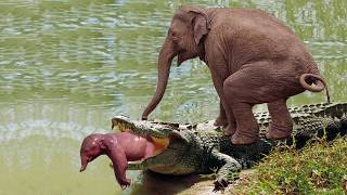 Unbelievable! Elephant Herd Against Crocodile Tried To Save Baby Elephant, Elephant Chase Wild Dogs