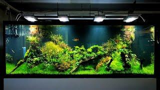 InterZOO 2018 - akwarystyka roślinna