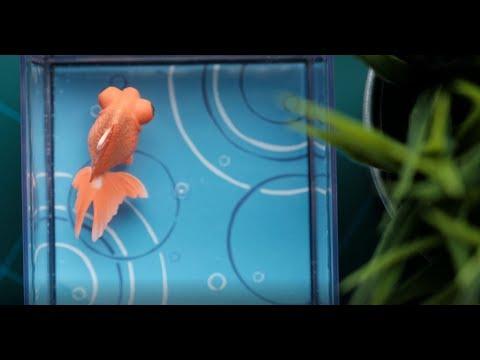 電池なしで泳いでくれるカラクリ金魚 出目金レビュー!
