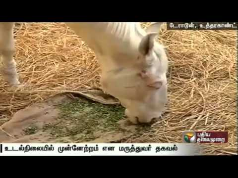 Police-horse-Shaktiman-recovering-very-fast-say-doctors