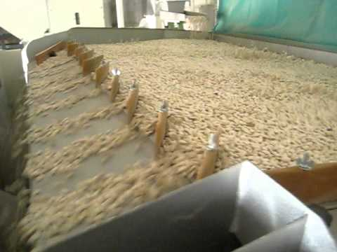 Carrot Seed Cleaning Plant