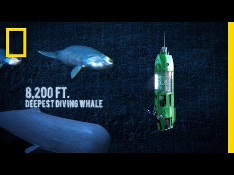Long Way Down: Mariana Trench | National Geographic
