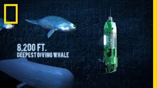 Long Way Down: Mariana Trench   National Geographic