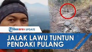 Komentari Video Pendaki Tersesat 'Dituntun' Pulang Jalak Lawu, Relawan: Dulu Ada Namanya Kiai Jalak