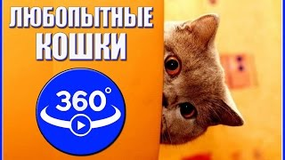Curious cat. Video 360 degrees.