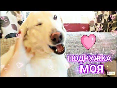 Прикольные собачки 💞 Funny dog