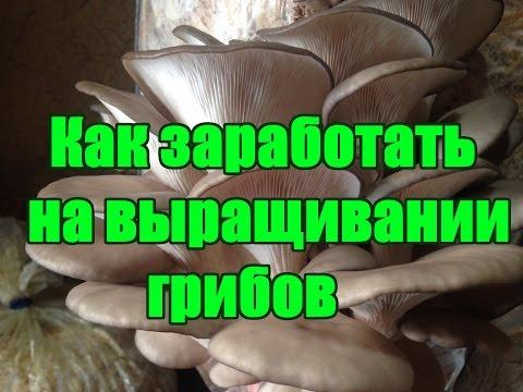 КАК ЗАРАБОТАТЬ НА ВЫРАЩИВАНИИ ГРИБОВ (ВЕШЕНКА)