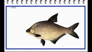 Откуда произошли названия рыб