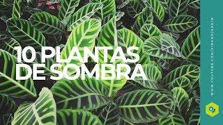 10 plantas de SOMBRA