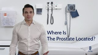 Where Is The Prostate?