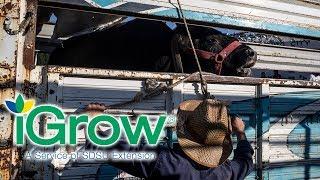iGrow: Importance of a Bovine Emergency Response Plan