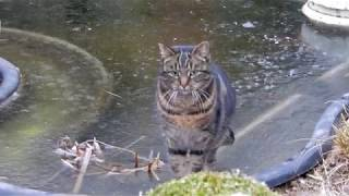 Katze Mimi – Goldfische On the rocks