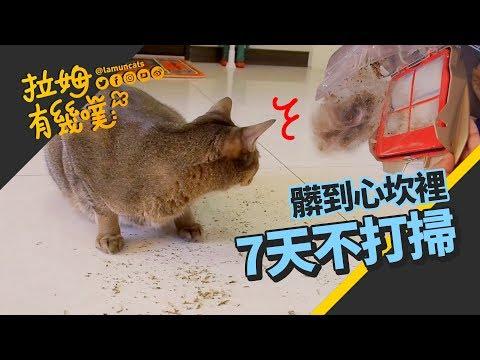 在養貓的環境裡 一個禮拜不打掃會怎樣呢