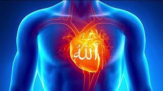 Dzikir Allah High Meditation...