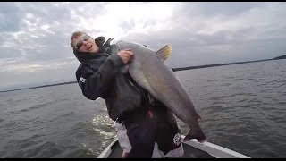 Giant Catfish While Crappie Fishing